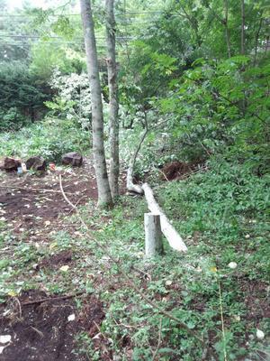 伐採2.jpg